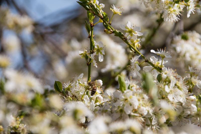 Die Bedingungen für den Frühling sind nicht die schlechtesten
